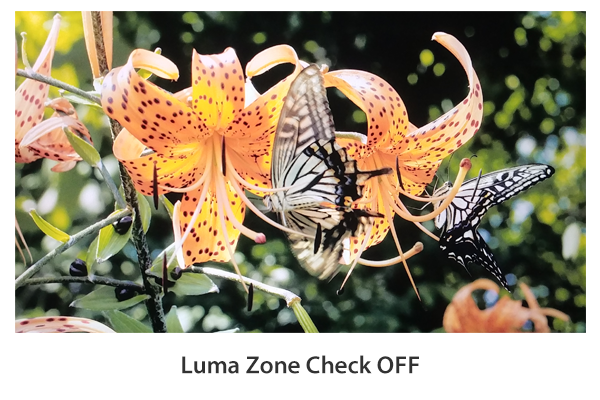 Luma(Y') Zone Check