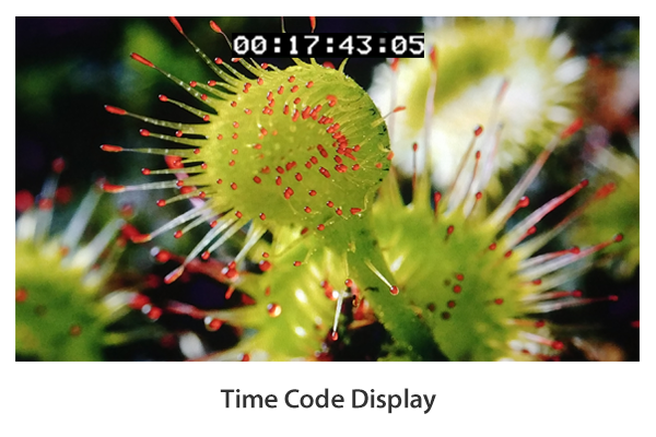 Time Code Display